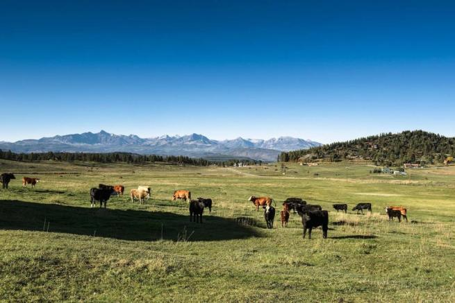 Image of Cattle field