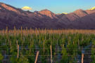 Vines of Mendoza Private Vineyards Argentina