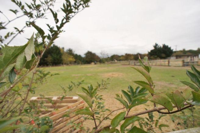 Field views fr...