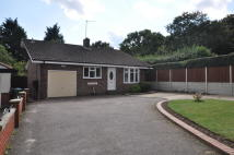 Detached Bungalow for sale in Holton Road, Halesworth