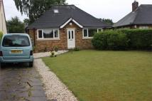Detached Bungalow to rent in 10 Hatchell Drive...