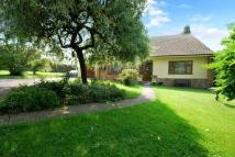 Detached Bungalow for sale in The Butts, Westbury
