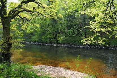 1/2 Mile of Fishing Rights - Ideal Game Fishing