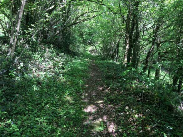 Surrounding Woodland Walks
