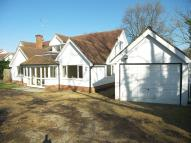 Bungalow to rent in West Horsley