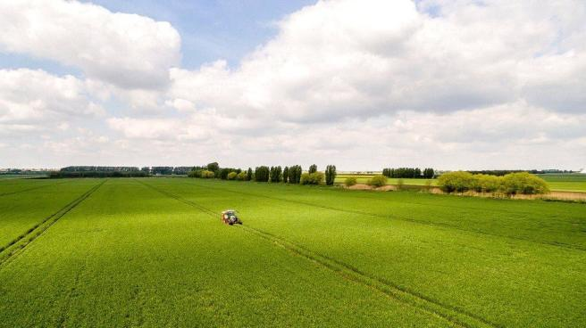 Fendt In Wheat
