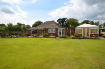 Detached Bungalow in Bashley Common Road...