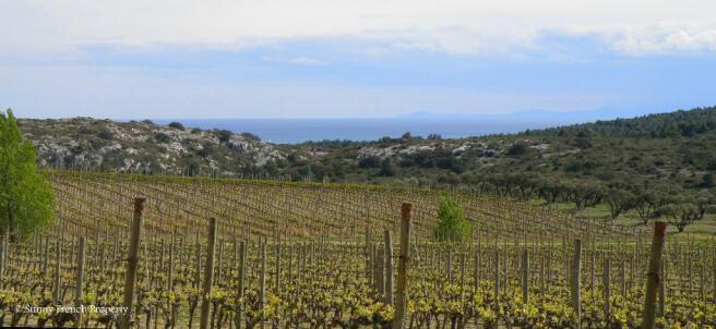 Vineyards inLaClape