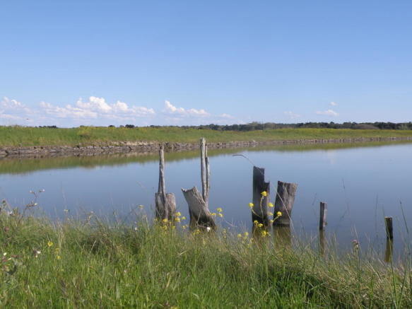 Marshes Ile de Ré