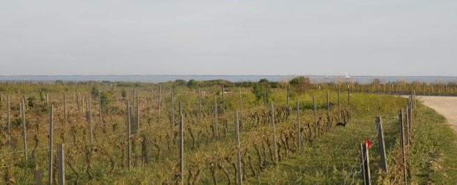 Sea and vineyard
