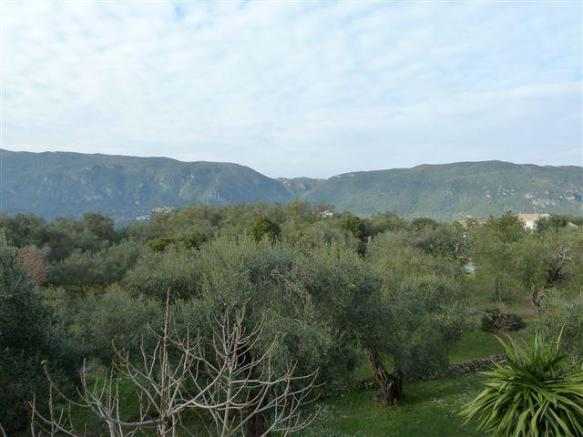 view across olive groves