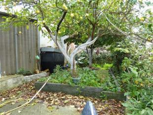 small garden area