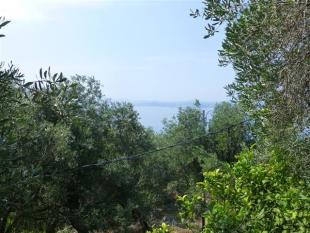 sea view through the olives