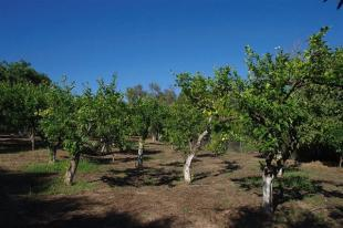 some of the fruit trees