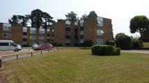 Ground Flat to rent in Lampits, Hoddesdon, EN11