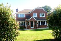 House Share in Treadcroft Drive, HORSHAM