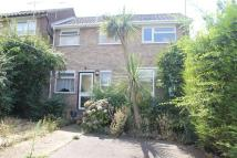 4 bedroom semi detached house to rent in Alyssum Walk, COLCHESTER