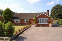 Maldon Road Detached Bungalow to rent