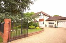 Detached property to rent in De Beauvoir Chase, CM11