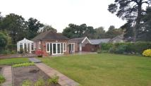 Detached Bungalow for sale in Culford