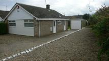 2 bed Detached Bungalow to rent in Normandy Avenue...