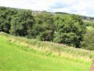 Rear facing views