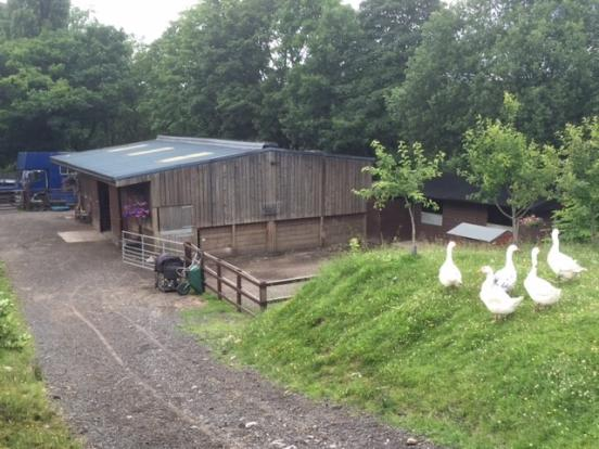 Equestrian Facility For Sale In Woodview Farm Stables