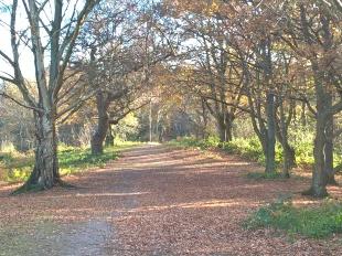 Clarke Gammon Estates, Guildfordbranch details