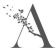 Atrium Estate & Letting Agents, Polmont