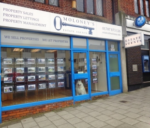 Moloney's Estate Agents , Cuffleybranch details