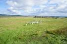 Croft land Blairbuie
