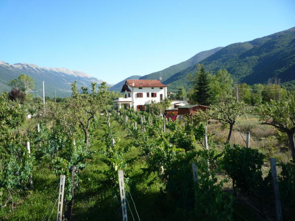 Vineyard and house