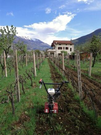 Vineyard rotovating