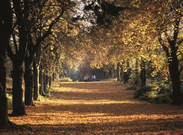 Thorndon Park.jpg