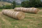 Bales in summer