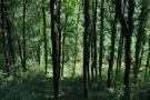 forest area