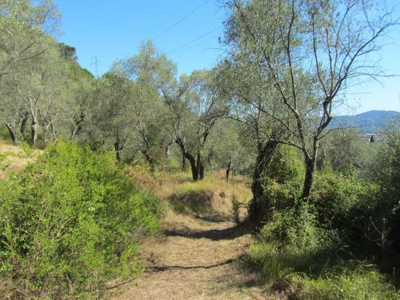 Through the olives
