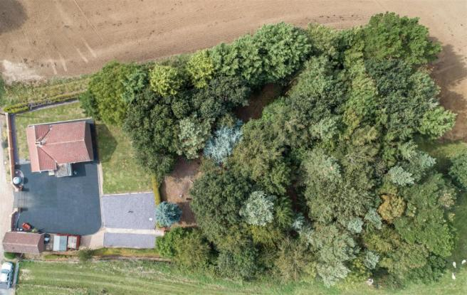 Aerial shot of wood
