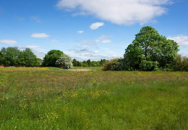 Cottam Meadow open space