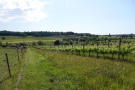 The vignoble and the grounds