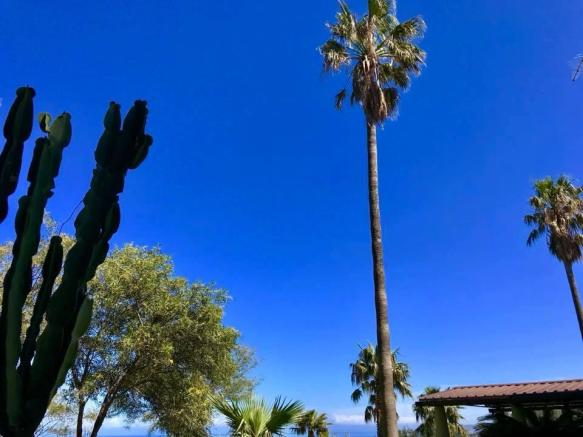 Fanstatic palm trees