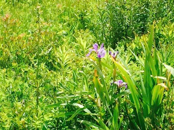 Lovely wild flowers