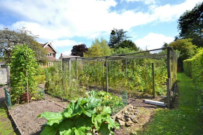 Vegetable Plot (3).jpg