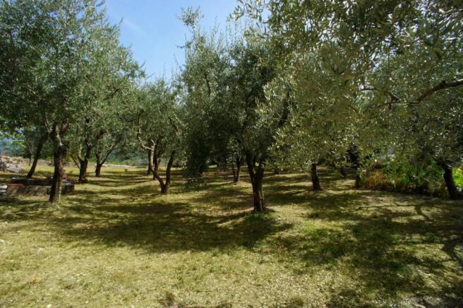 23 Olive groves
