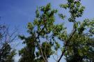25Mature fruit trees