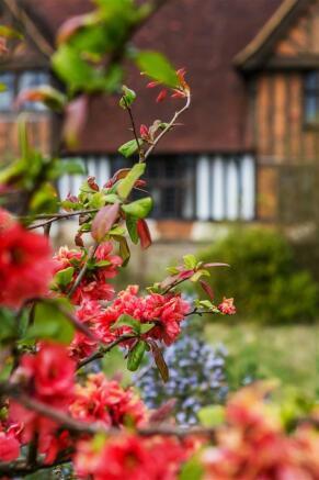 house. estate agency Leatherhead shrub