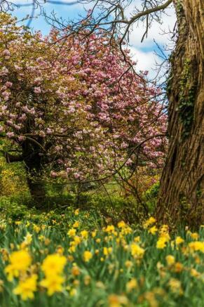 house. estate agency Leatherhead blossom
