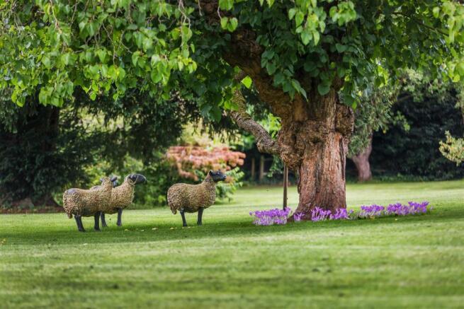 house. estate agency Bramley sheep