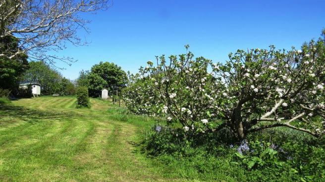ORCHARD/FIELD
