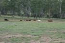 Farm Land for sale in Queensland, Kingaroy